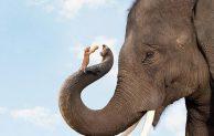 Gajah Dan Tikus