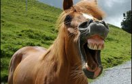 Kamu Lebih Percaya Sama Kuda?