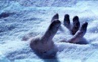 A Frozen Nightly Frozen
