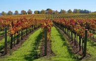 """Hari Biasa, Minggu II Pra Paskah, """"Seorang Tuan Tanah membuka Kebun Anggur"""""""