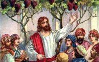 """Hari Biasa, Minggu V Paskah, """"Akulah pokok anggur yang benar"""""""