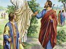 """Hari Biasa, Minggu VII Paskah, """"Panggilan dan Perutusan"""""""